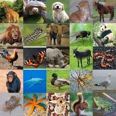Gommettes images a imprimer page 2 - Image d animaux a imprimer ...